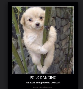Puppy pole dancing. Could it get any cuter?